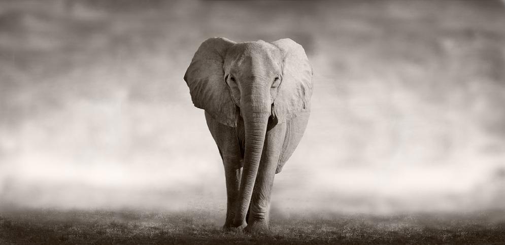 Das Tier- und Tierrechtsblog