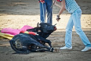 Foto: © Animal Equality